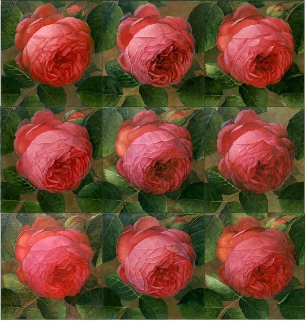 alle-rosen-kk